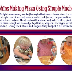 Dolphins Making Pizza