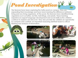 pond-reflection-panel-rev