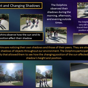 shadows and sunlight CC