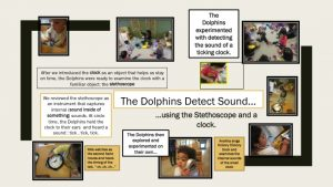 Dolphins Detect Sound